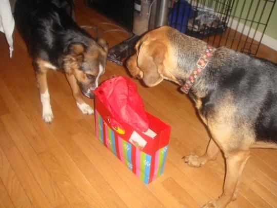 Christmas 2012 032